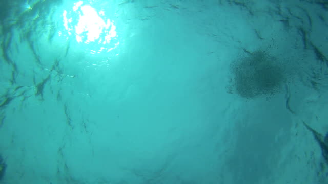 Diving video