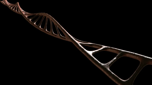 dna single strand animate view 2 new video