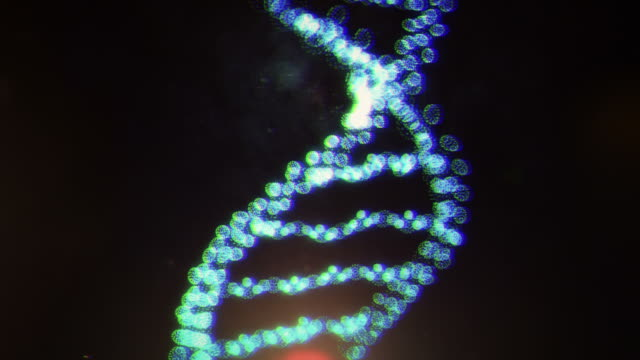dna structure video
