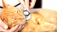Doctor examining a cat video