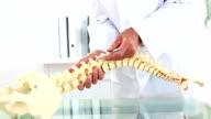 Doctor explaining skeleton model using pen to point video