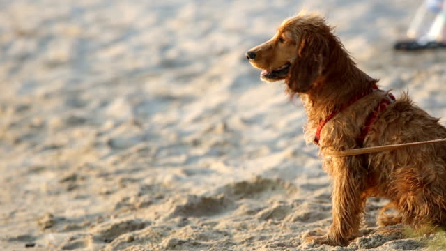 Dog and beach video