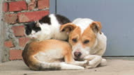 Dog and cat. Friendship forever. video