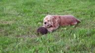 Dog and hedgehog video