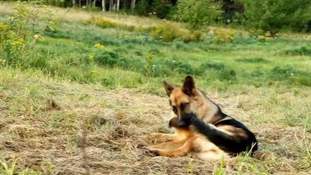 Dog at play video