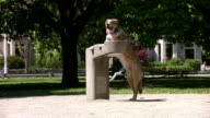 Dog at water fountain. video
