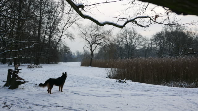 A dog barks in winter. (sound) video