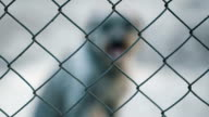 Dog Behind cage video