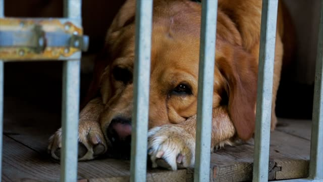Dog behind the bars of a cage video
