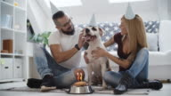 4K: Dog Birthday Party. video