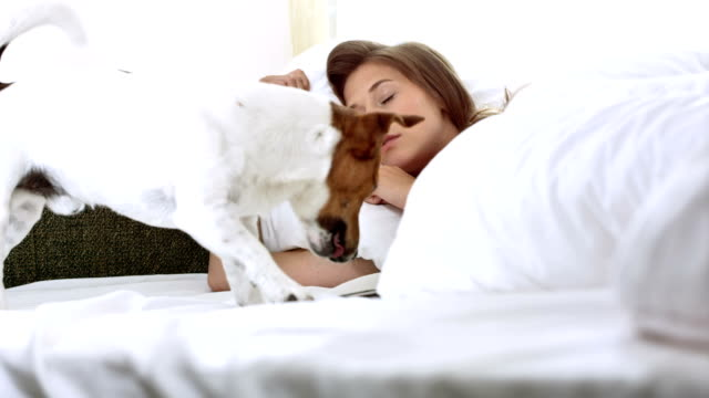HD: Dog Bringing A Phone For Owner In Bed video