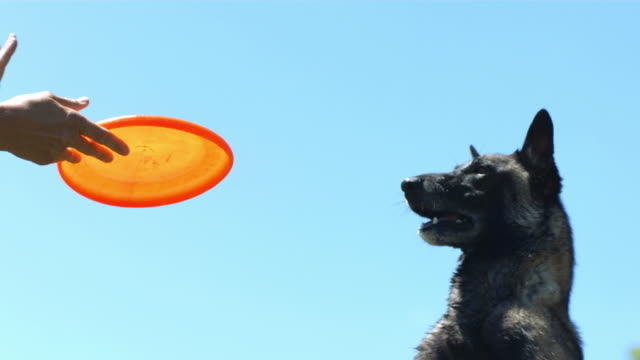 Dog catches disc in mouth, slow motion video