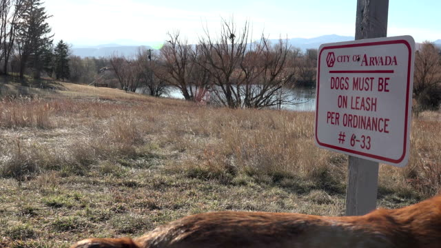 Dog Caught Violating Laws video