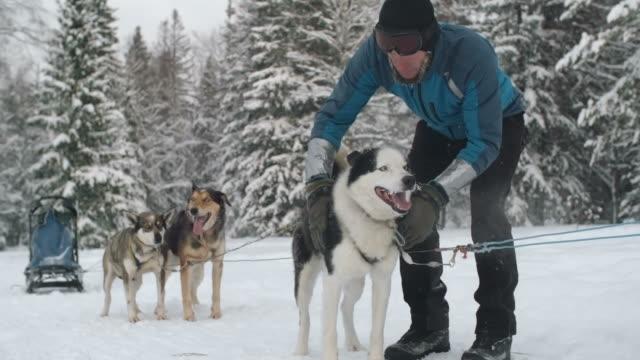 Dog driver petting Siberian husky before race video