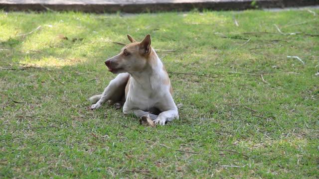 Dog eating bone. video