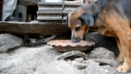 Dog eating. video