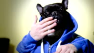 Dog eating with hands video