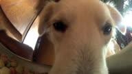 Dog eats pellets video