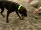 dog fetches quail video