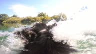 POV Dog fetching and jumping into the river video