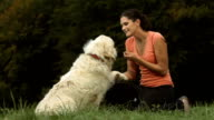 HD DOLLY: Dog Gives Paw To His Owner video