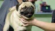 Dog Grooming at Pet Salon video