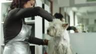 dog grooming video