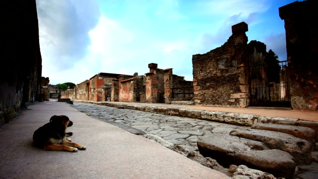 Dog guard in Pompei video