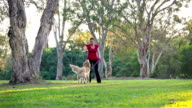 Dog having fun and fetching a stick in the park video