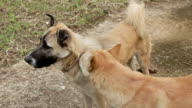 Dog help his friend video