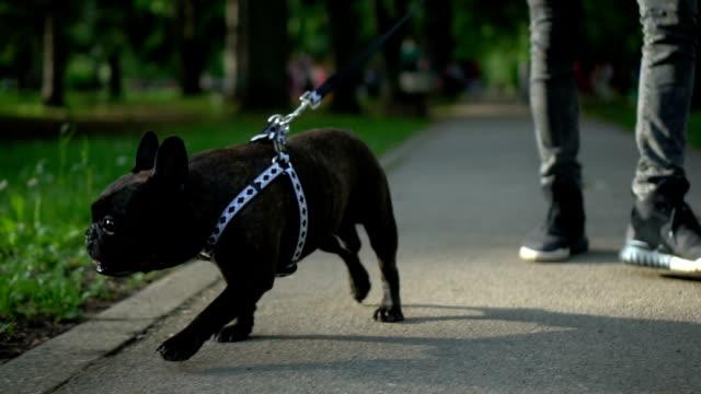Dog in a walk video
