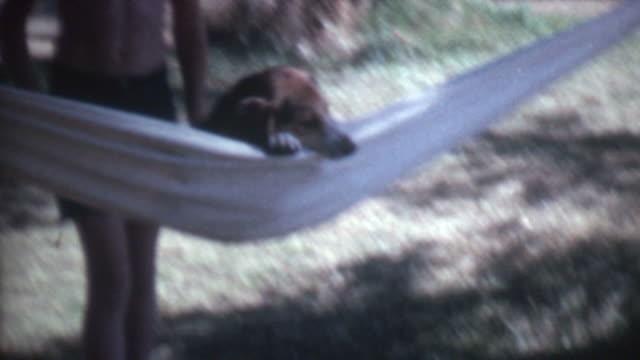 Dog In Hammock 1972 video