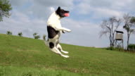 HD SUPER SLOW-MO: Dog Jumping For A Ball video