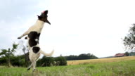 HD SUPER SLOW-MO: Dog Jumping For The Ball video