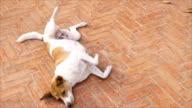 Dog laying on pavement under sun light video