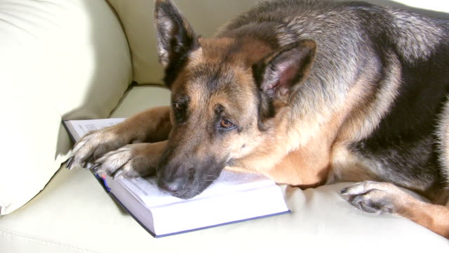 Dog laying on the open book video