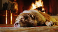 Dog lies on a background of a fireplace with firewood and buckets. Coziness and comfort, warm home video