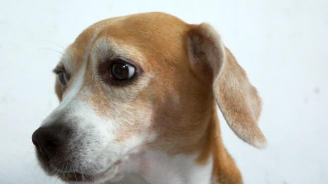 Dog looking at camera slow motion video