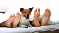 HD DOLLY: Dog Lying Between Couple's Legs video