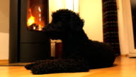 Dog lying in front of fireplace video