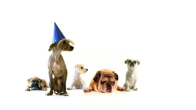 Dog Mega Party video