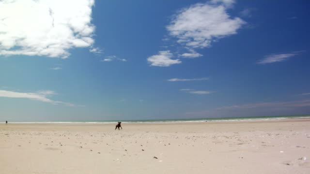 Dog on Beach (HD 1080) video
