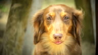 Dog Panting in Slow Motion video