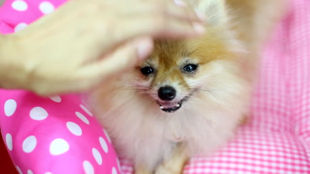 dog patting video