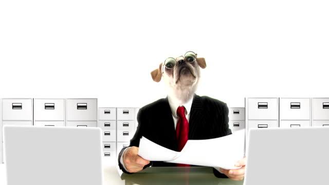 Dog People Clerk video