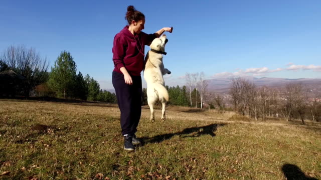 Dog playing with owner. Slow motion. video