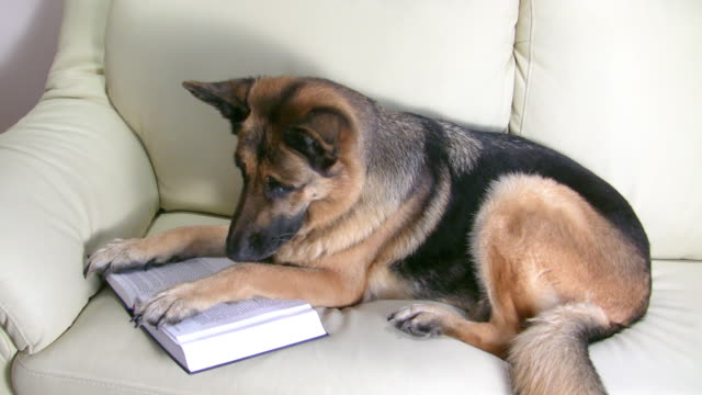 Dog reading book on the couch video