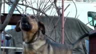 dog rough barking video