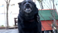 dog rough barking video