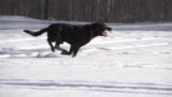Dog Runing Slow Motion video